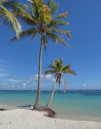 caribbean beach scenery