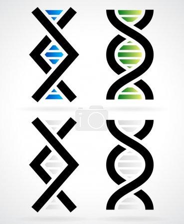 Cadena de ADN, hélice