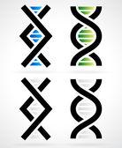 DNA strand helix