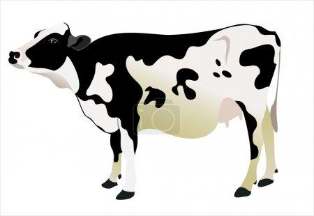 Illustration pour Vache isolée sur fond blanc - image libre de droit