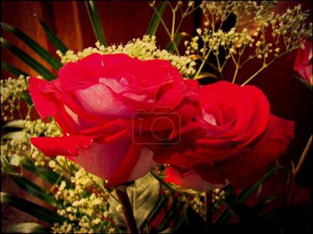 Винтажное фото роз