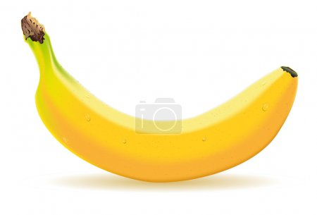 Illustration for Detailed illustration of a one banana - Royalty Free Image
