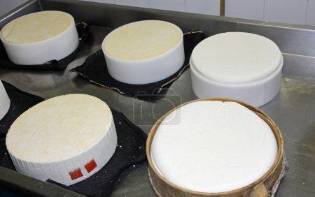 Herstellung von Käse und frischem Caciotta in verschiedenen Formen