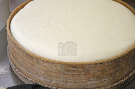 Käserei zur Herstellung von Käse und frischem Caciotta