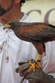 glove of a brave Falconer that trains a mighty fly Falcon comma