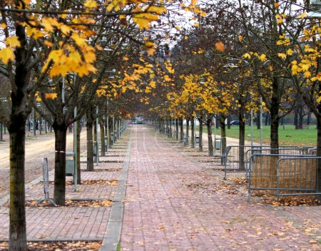 trees with leaves falling in autumn on a city park