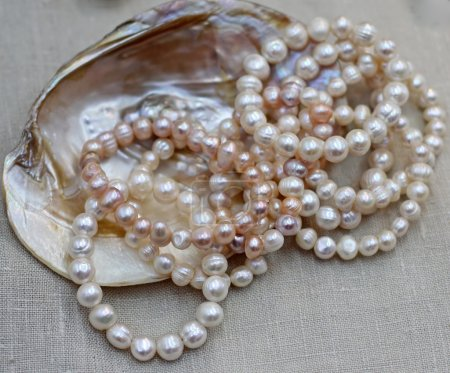 mother of Pearl Necklace with original Oyster for sale by jewele