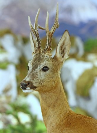 deer wild animals of the forest