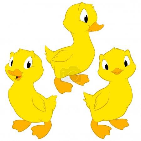 Cartoon Baby Ducks