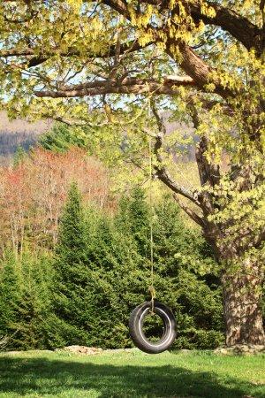 Foto de Neumático de coche usado como un columpio en un árbol en el jardín. - Imagen libre de derechos