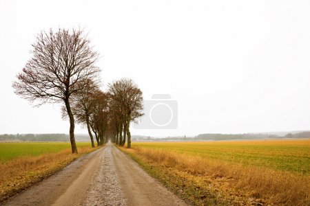 Avenue with bare trees