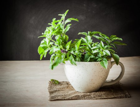 Photo for Holy Basil in the cup - Royalty Free Image
