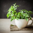 Holy Basil in the cup