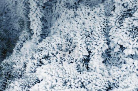 Foto de Ramas de abeto bajo nieve nieve - Imagen libre de derechos