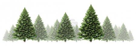 Pine Tree Winter Border