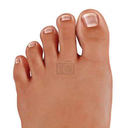 Photo pour Les orteils sains se rapprochent avec un pied humain avec des ongles propres comme symbole de traitement et de diagnostic des pieds dans le domaine médical de la podiatrie isolé sur un fond blanc . - image libre de droit