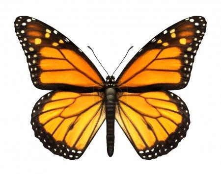 Photo pour Papillon monarque avec les ailes ouvertes dans une vue supérieure comme un papillon insecte migrateur volant qui représente l'été et la beauté de la nature. - image libre de droit