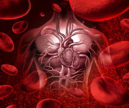Photo pour La transfusion sanguine et circultaion avec une icône cardio-vasculaires coeur humain avec l'anatomie d'un corps sain, sur un fond avec des cellules sanguines comme un symbole de santé médical d'un organe interne comme un concept de soins de santé médical. - image libre de droit