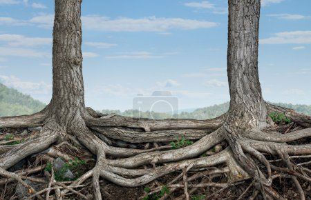 Photo for Strong partnership and foundation as a business concept of stability and loyalty with two trees with roots connected together as a symbol of agreement and merging forces together for success. - Royalty Free Image