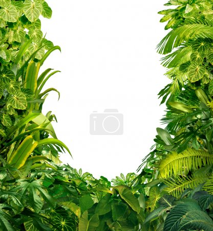 Photo for Tropical jungle as a blank frame with rich green plants as ferns and palm tree leaves found in southern hot climates as south America Hawaii and Asia with a white isolated copy space center. - Royalty Free Image