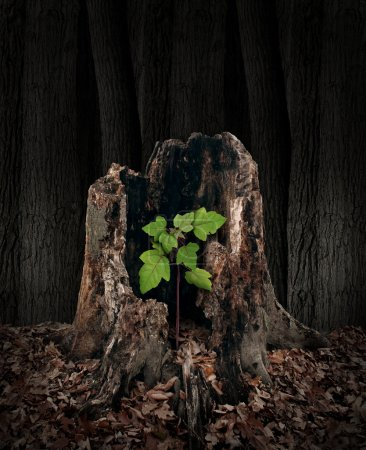 Photo for New development and renewal concept as a hollow old rotting tree stump with a growing green sapling emerging and replacing the past as metaphor for revival in business and in life and a symbol of hope with a vibrant  future. - Royalty Free Image
