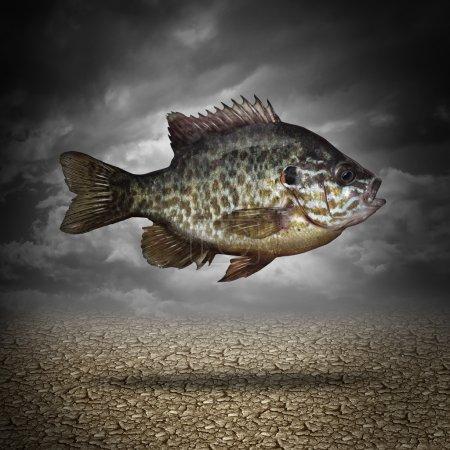 Photo pour Poisson hors de l'eau comme une métaphore d'entreprise ou d'un mode de vie pour s'adapter aux changements dans l'environnement comme un animal aquatique flottant au-dessus du sol fissuré séché comme un symbole de la gestion des crises et de surmonter les défis que le changement climatique. - image libre de droit