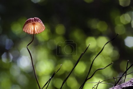 Photo for A single red mushroom growing out of the timber - Royalty Free Image