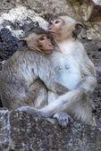 """Постер, картина, фотообои """"две обезьяны"""""""