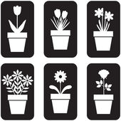 Set of icon of flowers in pots