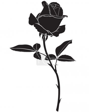 Illustration for Silhouette image beautiful rose flower - Royalty Free Image