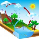 Water cycle diagram vector. condensation, evaporat...