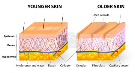 Visual representation of skin changes over a lifet...