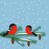 Cute bullfinches on branch spruce