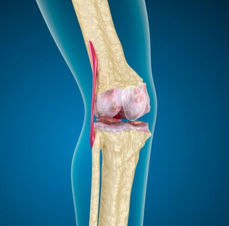 Human knee joint.