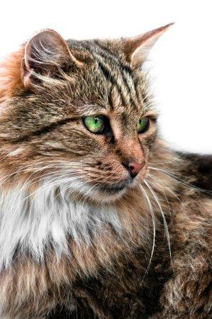Looking cat portrait side view