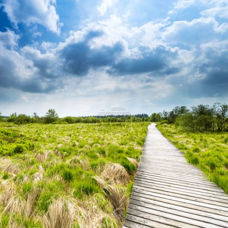 Photo for Boardwalk in belgium veen bog landscape with cloud sky. Taken outside with a 5D mark III. - Royalty Free Image