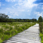 High venn boardwalk trail Belgium Eifel nature park moorland clouds tourism