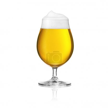 Beer glass beer tulip beer froth dew drops sparkling crown gold Altbier brewery alcohol pils isolat