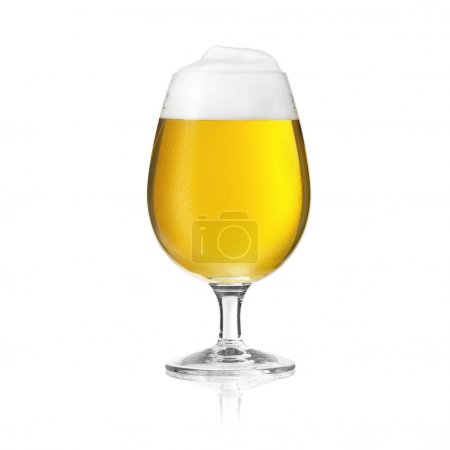 Pils beer tulip beer glass beer froth dew drop mushroom foam crown Altbier gold alcohol brewery