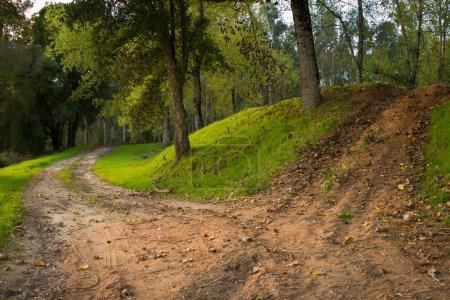 Woods Dusty Road
