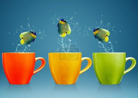Photo pour Angelfish sautant hors de la tasse avec éclaboussures d'eau et mouvement acrobatique . - image libre de droit