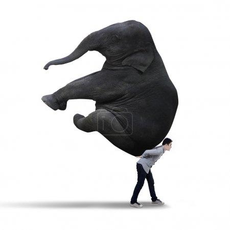 Businessman carrying big elephant - isolated