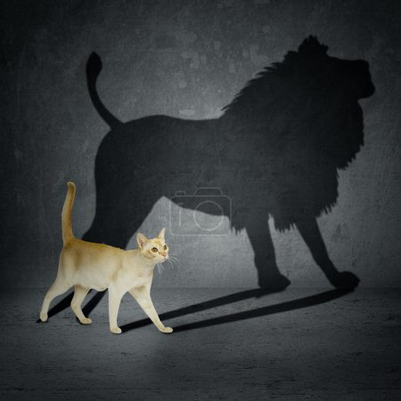 Photo for Cat with lion shadow on the wall - Royalty Free Image