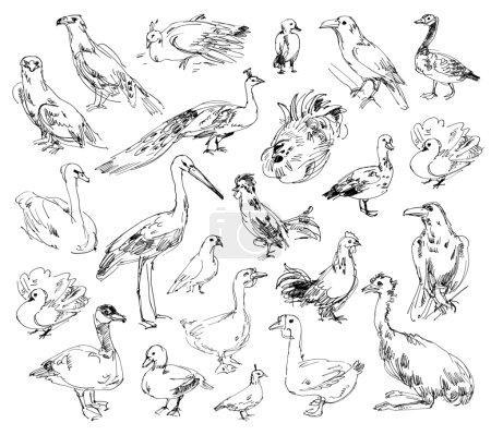 Photo pour Oiseaux sauvages. Zoo d'Yokohama. ensemble. dessinées à la main - image libre de droit