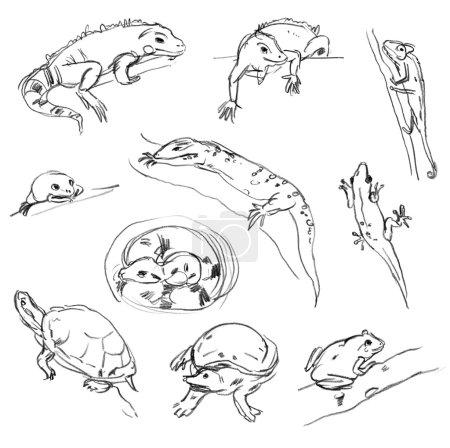 Photo pour Reptiles. ensemble. caméléon-rainette, iguane, python, boa, tortue. main-tirage au sort - image libre de droit