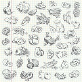 Freehand drawing fruit and vegetables on a sheet of exercise book Vector illustration Set