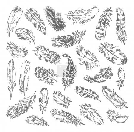 Illustration for Freehand drawing quill. Vector illustration. Isolated on white background - Royalty Free Image