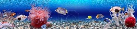Photo pour C'est une photo très colorée du monde sous-marin et de ses habitants - des poissons exotiques . - image libre de droit