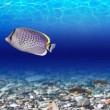 It is very colourful photo of the underwater world...