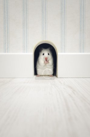 Hamster standing in his lair